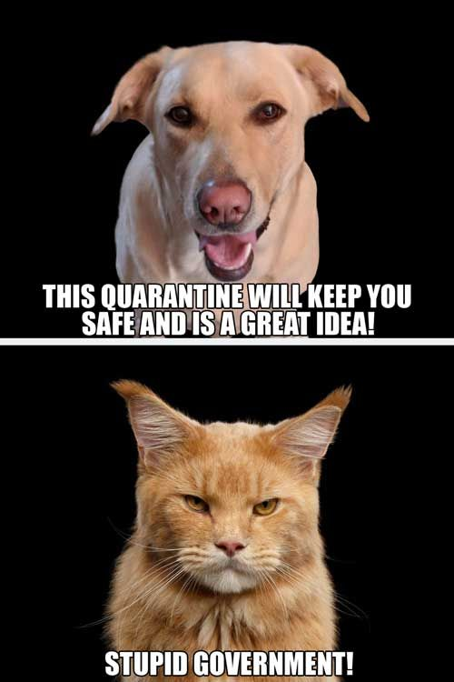 Over 65 Unforgettable Dog Memes Hilarious Pictures Unleashed Cute Funny Dogs Animal Humor Dog Funny Animal Jokes