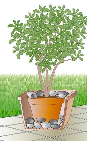 Windschutz für Kübelpflanzen