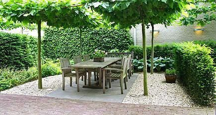 pleached trees around seating: