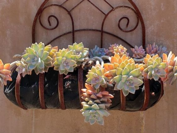 The 5 Succulents that Cannot Be Missing in Your Garden