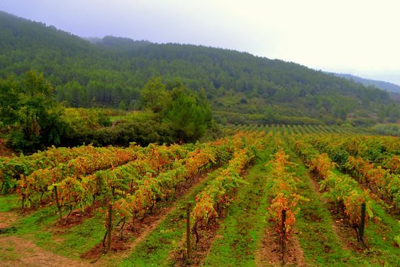 Olor a tierra mojada. A disfrutar de la agradable fragancia que nos deja la lluvia. Foto de Àngela Llop.