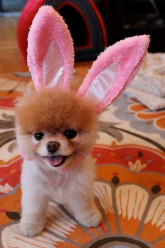 Ok... Who is the genius who put the freakin bunny ears on this little guy...