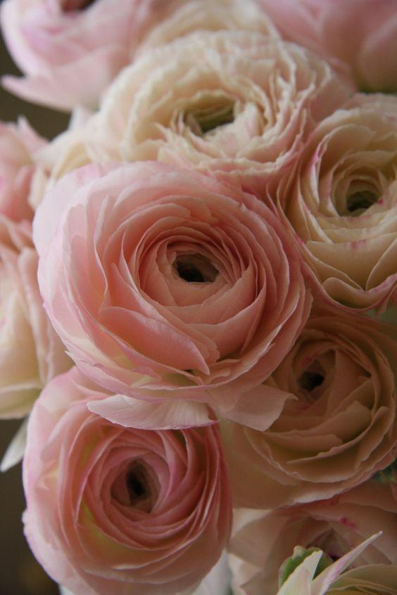 belas flores em rosa soft