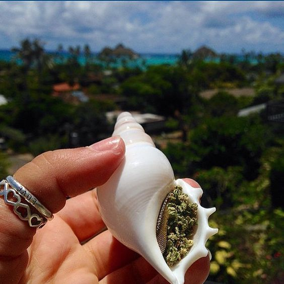 Hey, I found this really awesome Etsy listing at https://www.etsy.com/listing/237004519/seashell-smoking-pipe
