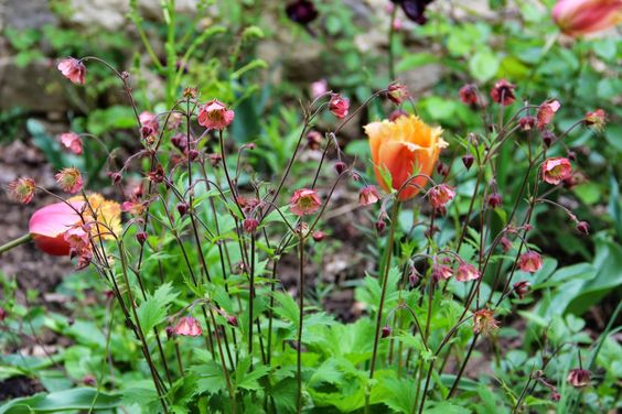 Derrière les murs de mon jardin: Association de plantes