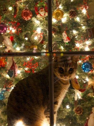 Gato de la Navidad (Imagen vía flickr):