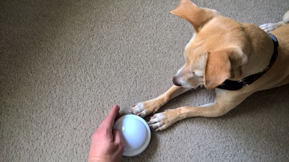 ADHDog Blog - Dog Tricks Tuesday: Teaching your dog to Target http://buff.ly/1P6YAPP