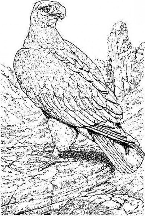 endangered animals coloring pages news bubblews javaman 39 s pins kid and family friendly. Black Bedroom Furniture Sets. Home Design Ideas