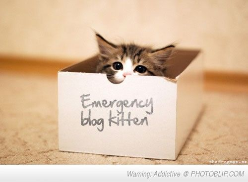 Emergency Blog Kitten