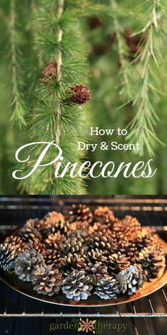 DIY winter activities Make Scented Pinecones for a pretty home diffuser.