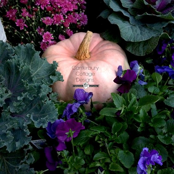 Found this amazing pink pumpkin at the pumpkin patch! www.canterburycottagedesigns.blogspot.com