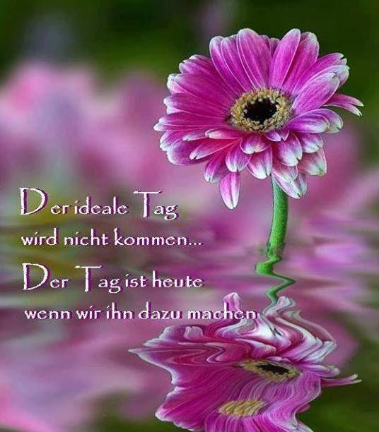 Entdecke den reichtum deiner tage durch dankbarkeit - Blumen zitate ...