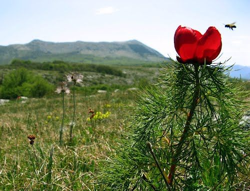 Panoramio - Photos by Ольга Щедрова