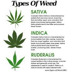 The 3 types of cannabis, Sativa is the better option for a smoke during the day a higher buzz energy ect, wher indica makes you lazy gives you a body high.