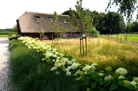 hydrangea arborescens hedge and ornamental grass: