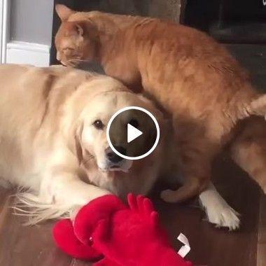 Gato e seu amigo cachorro gatinho fazendo um carinho nele