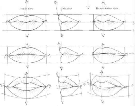 Anatoref The Mouth Analysis And Structure In 2020 Lips Drawing Mouth Drawing