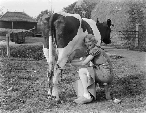 Milk a cow.