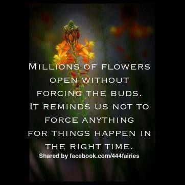 Millions of flowers open without forcing the buds. It reminds us not to force anything for things happen in the right time. ;)