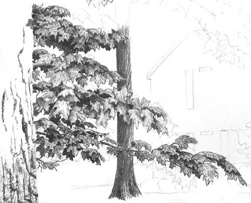 Drawing Tree Foliage in Pen and Ink