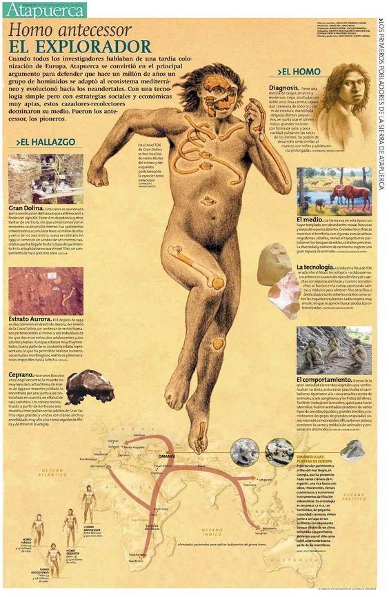 Atapuerca: Homo antecessor