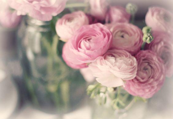 May Flowers : Ranunculus