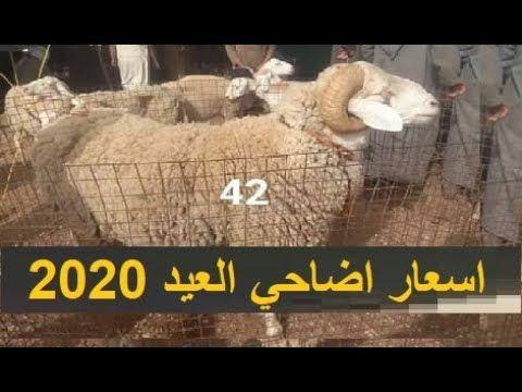 اسعار كباش العيد 2020 في سوق الجلفة اسعار اضاحي العيد 2020 Poster Movie Posters Movies