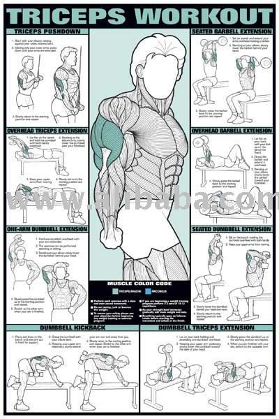 Mens Tricep Workout - http://img.alibaba.com/photo/102569894/Triceps_Workout_24_x_36_Poster.jpg