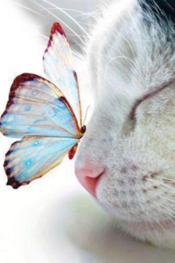 Fotos de gatos,animais especiais e de beleza irretocável!: