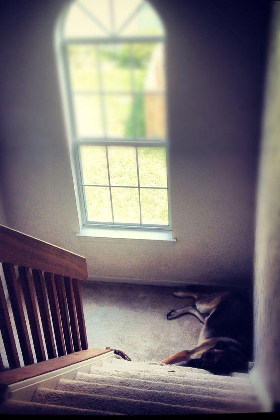 Sleepy dog.