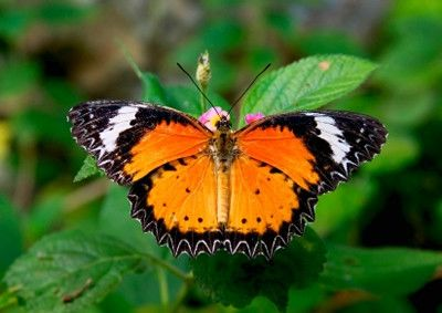 pictures of butterflies | King of Butterflies – The Monarch Butterfly Connecticut Butterfly ...