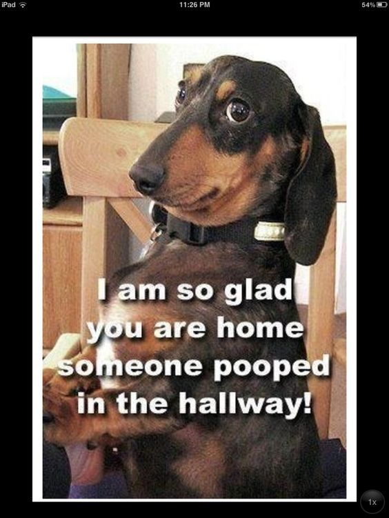 I'm so glad you are home someone pooped in the hallway ...