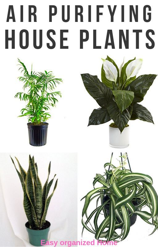 Read Here For Low Maintenance House Plants Recommendations That Will Liven Up Your Low Maintenance Indoor Plants Air Purifying House Plants House Plants Indoor