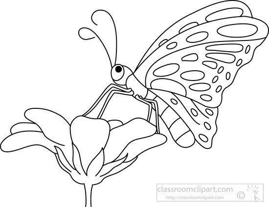 63b30d2a058205e2af7c76c992be0742 Butterfly Black White Outline Clipart Flowers And Butterflies Black A Clip Art Pictures Animal Outline Animals Black And White