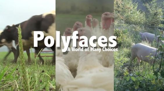 Polyfaces Documentary -Joel Salatin healthy farming style heals the land.