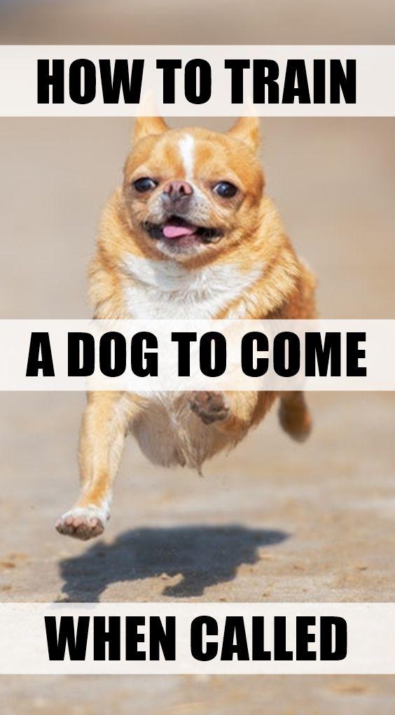 47b4a9e00585ee2a91454903f6b8d24d - How Do You Get A Puppy To Come When Called