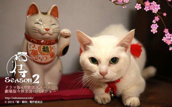 """映画とドラマ『猫侍 SEASON2』公式 on Twitter: """"【きょうたま】今日から新年度です!張り切っていきましょうー! #猫侍 #ドラマ http://t.co/aams5zDNS2"""""""