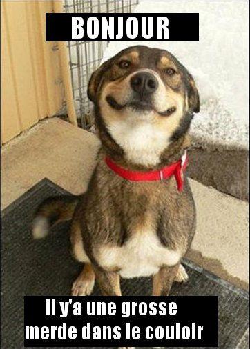Humour de chien