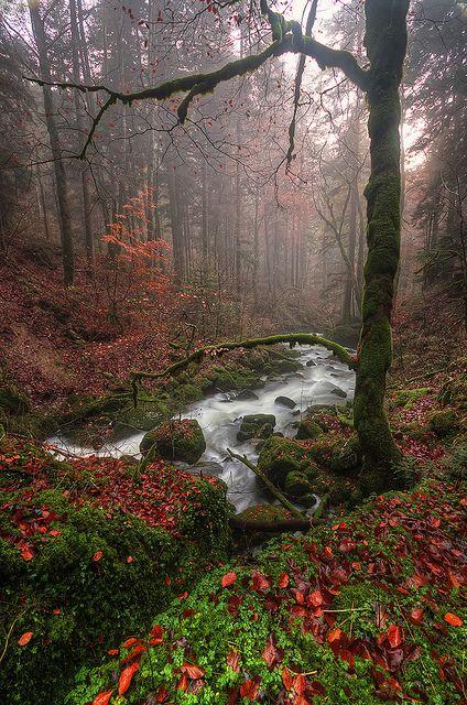 Francia. ¿Cuántos sonidos podría percibir ahí? Pájaros, hojas, agua... y ¿Cuántos olores?- Probablemente me dejaría de doler el cuello si me diera un paseo.