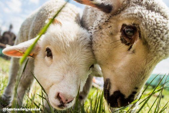 Necesitas un motivo para comenzar a respetar a los demás animales? Aquí te dejamos dos  https://t.co/D6Ip5Hz04X