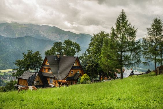 #Village cottage and cows  Village cottage and cows on green grass field Tatry mountains at vackground Zakopane Poland