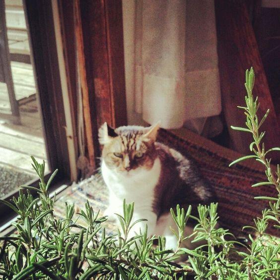 My Liza Louise... sweetest kitty ever!