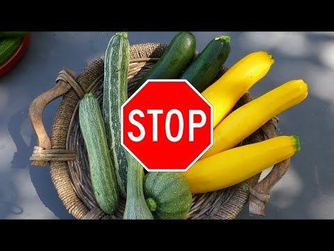 Die Zucchini Und Das Todliche Cucurbitacin Plantura Huhnerhaltung Im Garten Giftige Pflanzen Zuchten