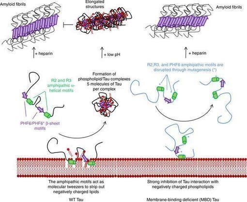 Biologia molecular protein as para bajar de peso