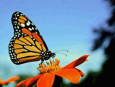 Monarch. Wow!
