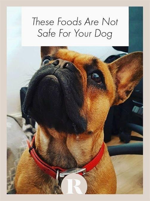 Dog Training Jackson Mi Service Dog Training Requirements Dog