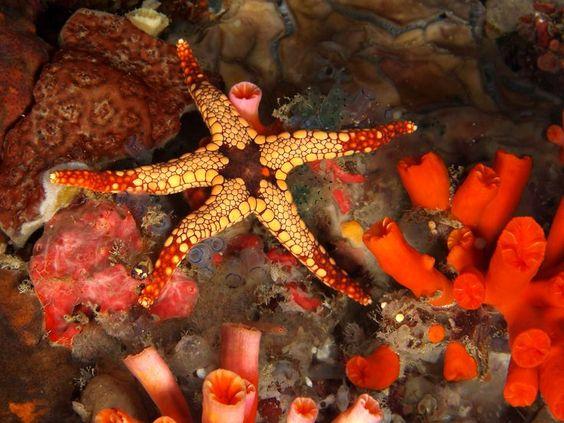 ocean life star fish - Pesquisa Google