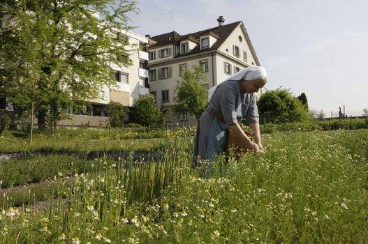 Heiligkreuz Convent, Cham (ZG): garden manager Sister Theresita Blunschi collecting herbs, 2009 © Esther Herzog, Luzern/Kloster Heiligkreuz, Cham