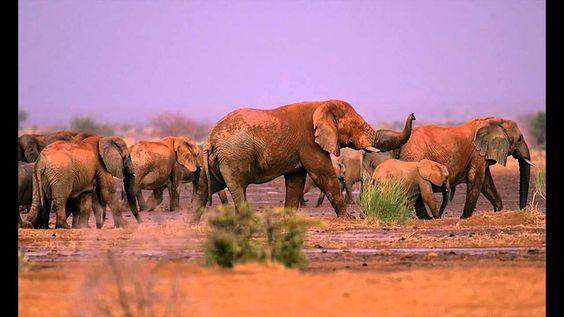 Mali Elephant Project