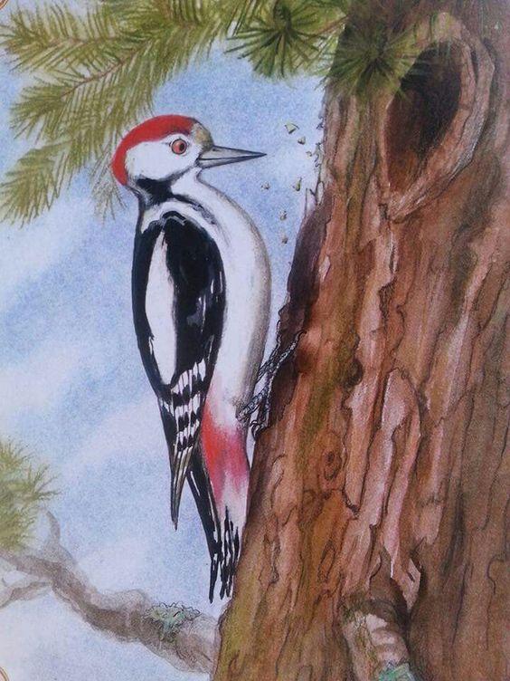 Harkály bird painting by Gábor Emese www.gaboremese.hu: